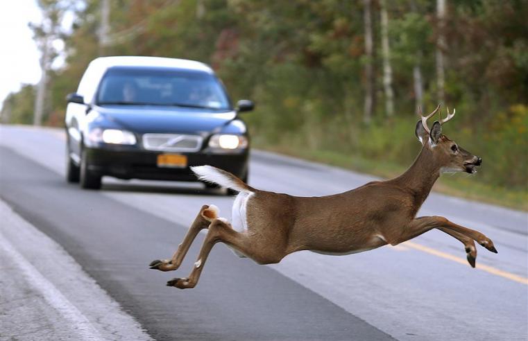 Deer Hunting Technique